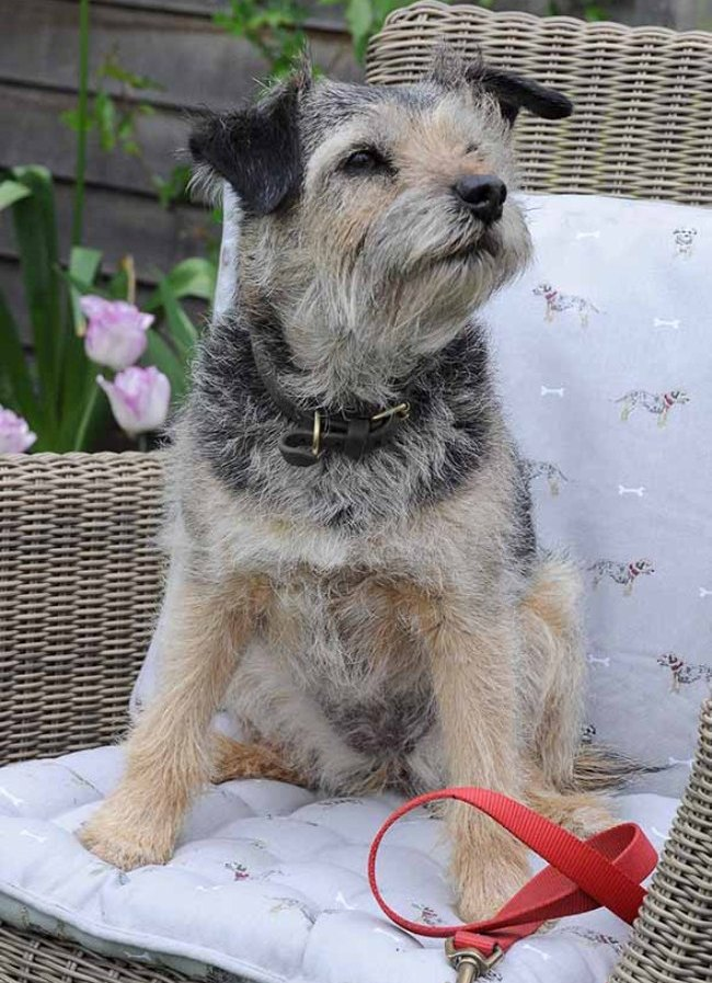 ALL15400 Terrier Cushion Lifestyle Low Res 2