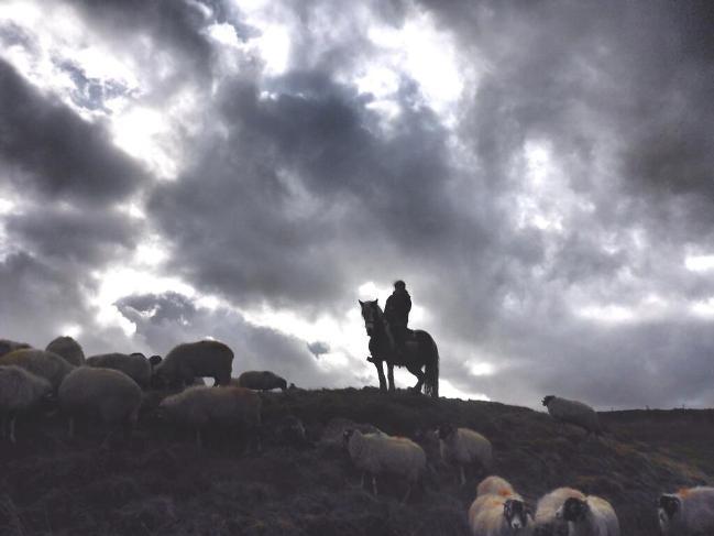 Amanda Shepherding on her horse