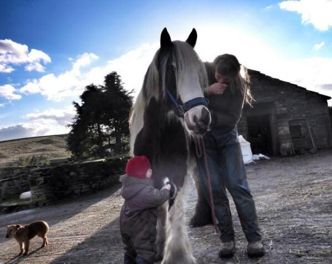 Josie the gentle giant being groomed by Toddler Sidney