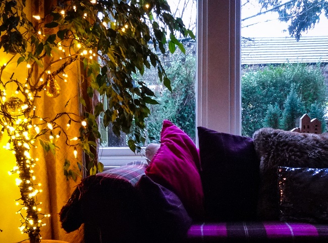 I bought the large drop string lights from Stockeld Park near Wetherby. Now they are on my weeping fig.