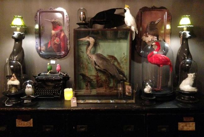 Gaynor has a penchant for taxidermy