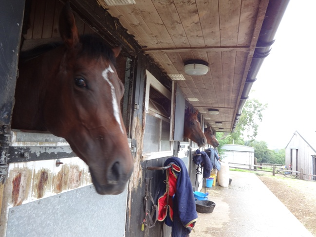 Some of the horses at Ann Duffield's yard