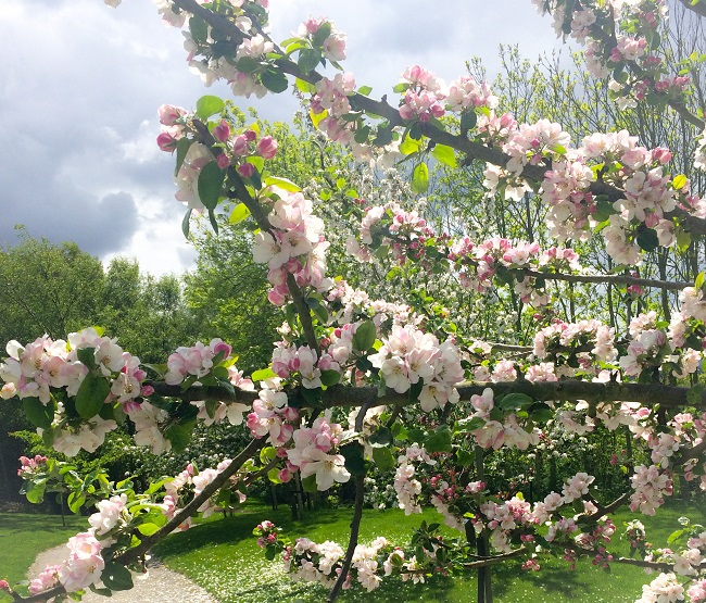 The blossom when I went two weeks ago to Caring For Life at Crag House Farm